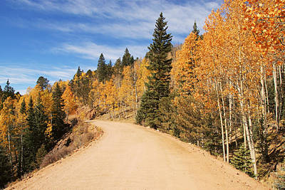 Photograph - Golden Leaves Along Gold Camp Road No.6 by Daniel Woodrum