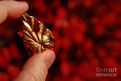 Jewelry Photograph - Golden Leaves by Amy Cicconi