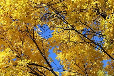 Autumn Photograph - Golden Leaves In A Blue Sky by Rosanne Jordan