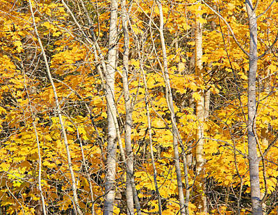 Photograph - Golden Leaves In Autumn Abstract by Jennie Marie Schell