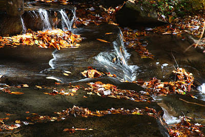 Photograph - Golden Leaves In The River by Jean Clark