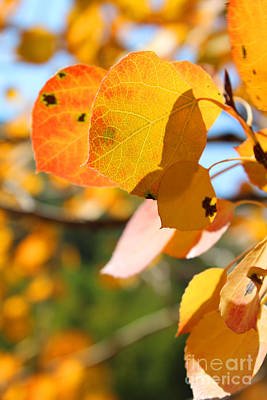 Photograph - Golden Leaves by Kate Avery