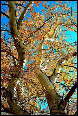 Photograph - Golden Leaves by Kathy Sampson