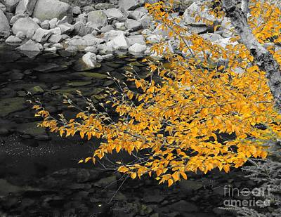 Photograph - Golden Leaves by Marcia Lee Jones