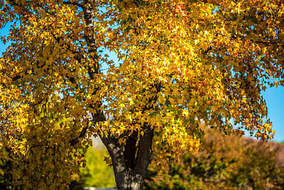 Golden Leaves Of Autumn Art Print by Mike Lee