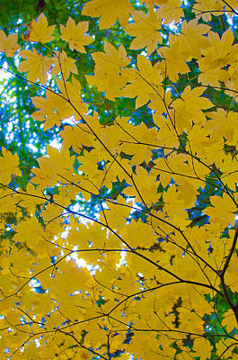 Photograph - Golden Leaves Of Autumn by Tikvah's Hope