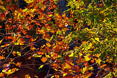 Hood Ornaments And Emblems - Golden leaves on a fall afternoon by Andy Lawless