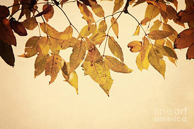 Photograph - Golden Leaves by Pam  Holdsworth