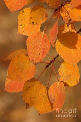 Blured Photograph - Golden Leaves by Stephen Thomas