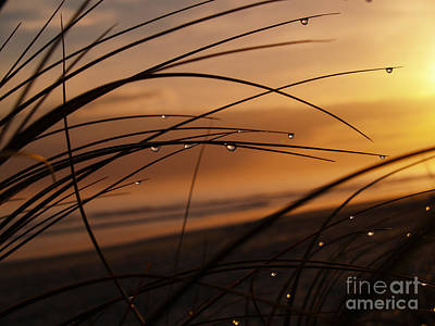 Golden Light. Art Print by Brian Scantlebury