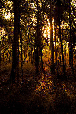 Photograph - Golden Light In Darwin by Zoe Ferrie