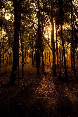 Photograph - Golden Light In Darwin by Zoe Ferrie