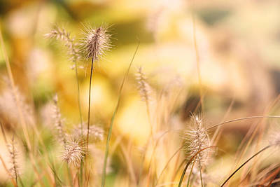 Photograph - Golden Light Of Autumn by Trina  Ansel