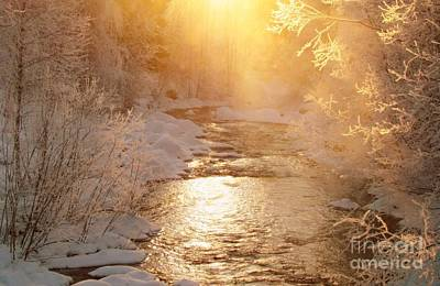 Photograph - Golden Light by Sylvia  Niklasson