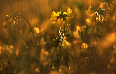 Photograph - Golden Light by Thomas Born