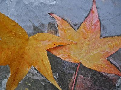 Photograph - Golden Liquidambar Leaves by Kirsten Giving