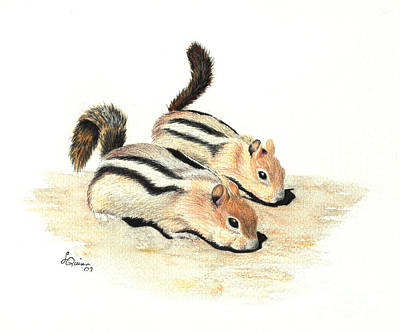 Golden-mantled Ground Squirrels Art Print by Lynn Quinn