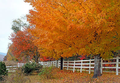 Photograph - Golden Maples And White Fence by Duane McCullough