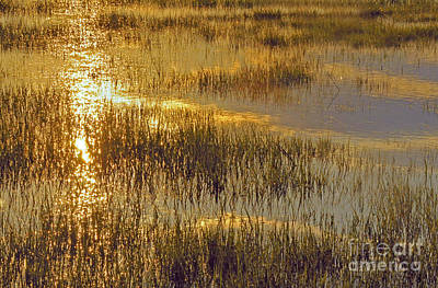 Photograph - Golden Marsh by Cindy Lee Longhini