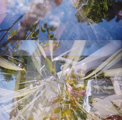 Crappy Photograph - Golden Mean Holga Garden 1 by Carolina Liechtenstein