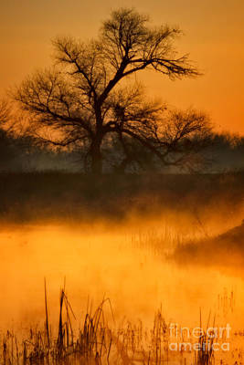 Photograph - Golden Mist by Beth Sargent