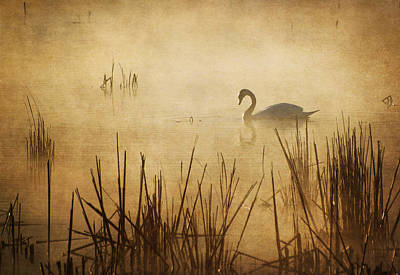 Photograph - Golden Mist I by Dale Kincaid