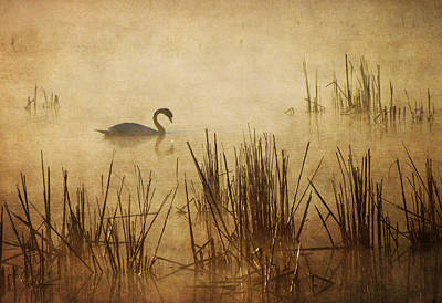Photograph - Golden Mist II by Dale Kincaid