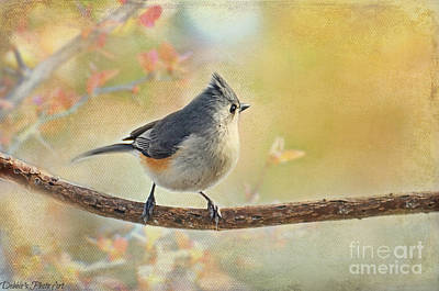 Tufted Titmouse Photograph - Golden Morning Tufted Titmouse by Debbie Portwood