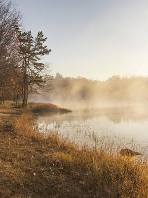 Photograph - Golden Morning by Yelena Rozov