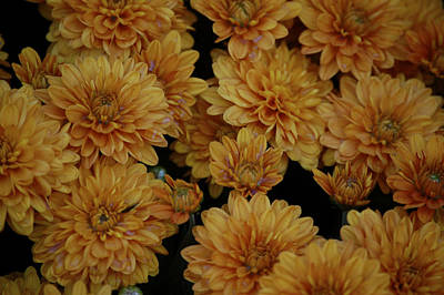 Photograph - Golden Mums by Sherlyn Morefield Gregg