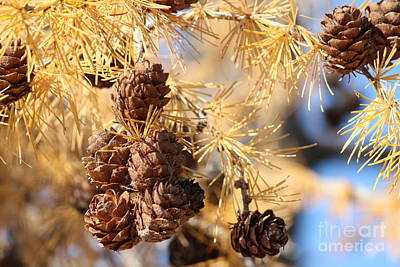 Art Print featuring the photograph Golden Needles by Ann E Robson