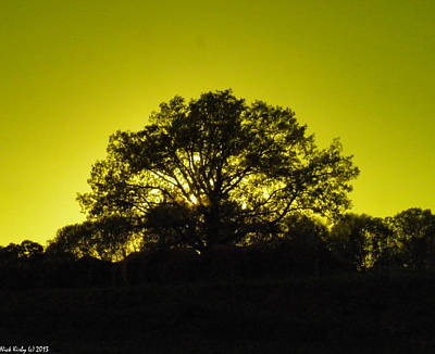 Photograph - Golden Oak by Nick Kirby