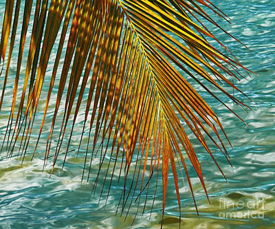 Photograph - Golden Palm Leaf by Anuj Nair