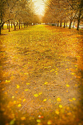 Surrealism Royalty-Free and Rights-Managed Images - Golden Park Chicago by Steven Hlavac
