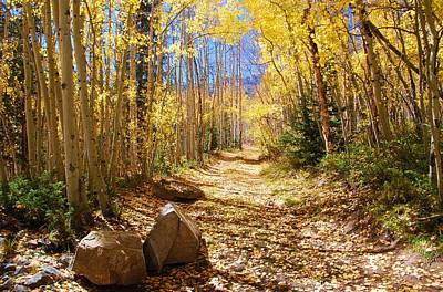Photograph - Golden Path by Cascade Colors