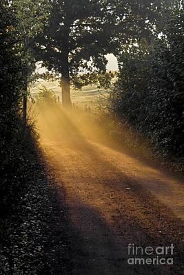 Impressionism Photos - Golden pathway by Heiko Koehrer-Wagner