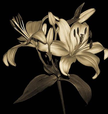 Photograph - Golden Petals by Carolyn Marshall