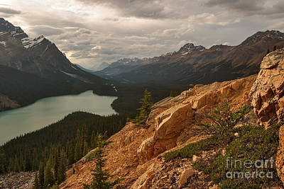 Photograph - Golden Peyto by Charles Kozierok