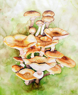 Golden Pholiota Mushroom Original by Alison Hamil