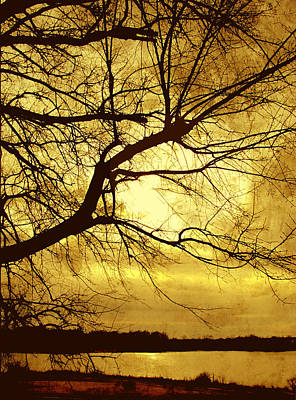 Golden Pond Art Print by Ann Powell