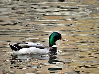 Photograph - Golden Pond Redux by Tom DiFrancesca