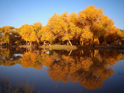 Photograph - Golden by Qing Yang