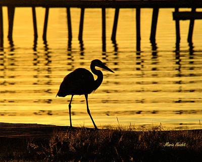Photograph - Golden Quietude by Maria Nesbit