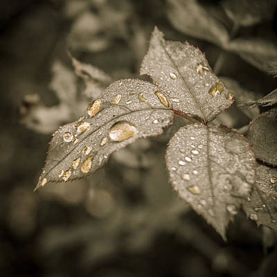 Photograph - Golden Raindrops by Carolyn Marshall