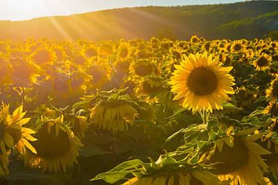 Photograph - Golden Rays by Mark Robert Rogers