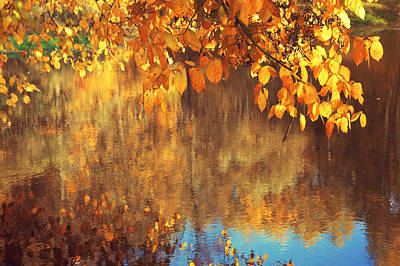 Photograph - Golden Reflections In The Pond by Jenny Rainbow