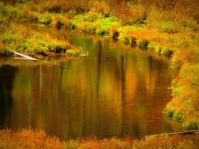 Photograph - Golden Reflections by Karen Shackles