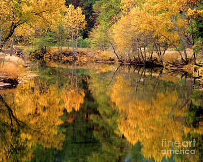 Golden Reflections Art Print by Terry Garvin