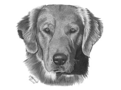 Drawing - Golden Retriever - 026 by Abbey Noelle