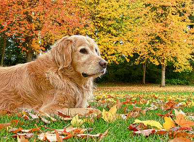 Photograph - Golden Retriever Dog Autumn Day by Jennie Marie Schell